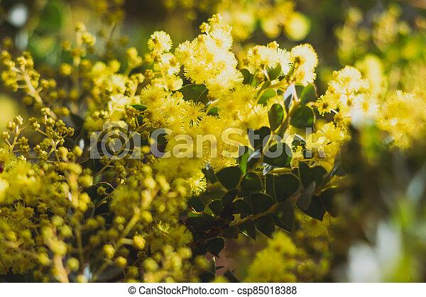 australien, arrière-cour, indigène, extérieur, ensoleillé, canisse, plante - csp85018388