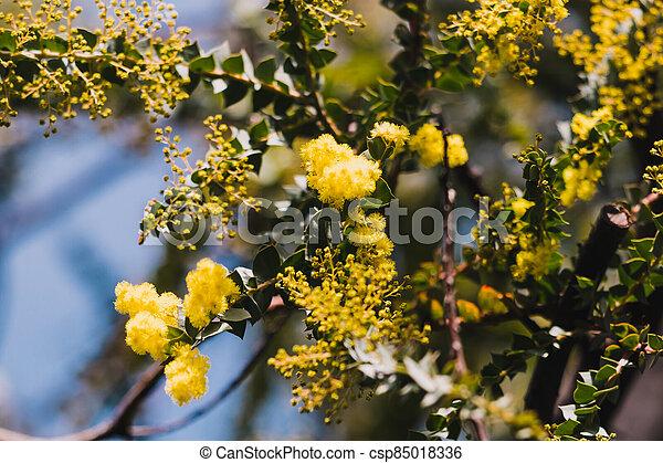 australien, arrière-cour, indigène, extérieur, ensoleillé, canisse, plante - csp85018336