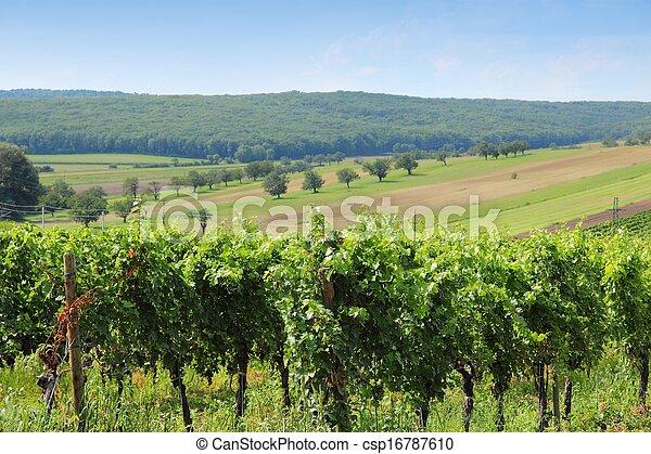 Austria vineyard - csp16787610