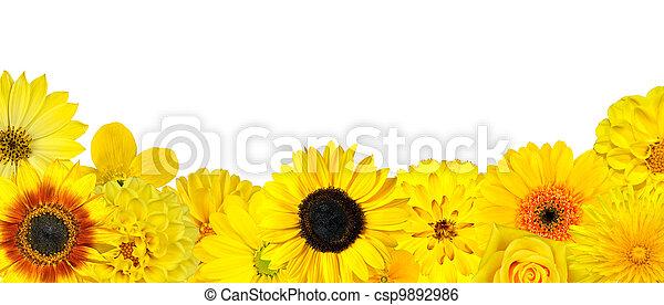 Selektion gelber Blumen in der unteren Reihe isoliert - csp9892986