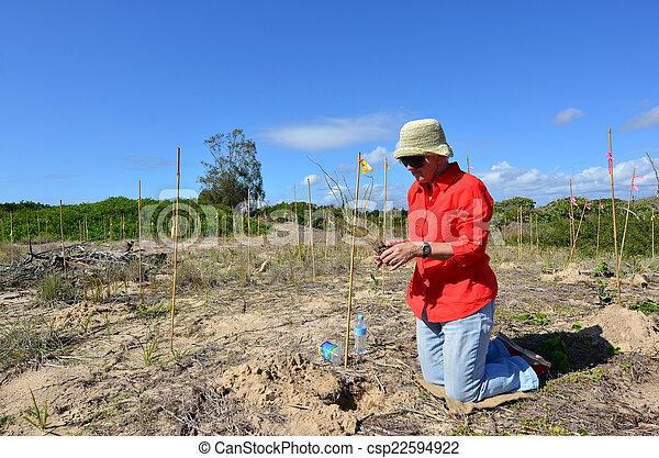 ausztrália, arany, dűne, lesiklik, restaurálás, queensland - csp22594922