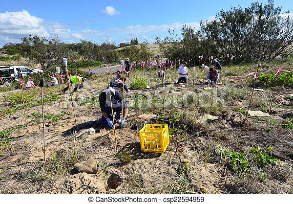 ausztrália, arany, dűne, lesiklik, restaurálás, queensland - csp22594959