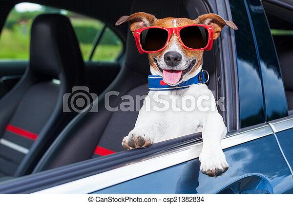 autó ablak, kutya - csp21382834