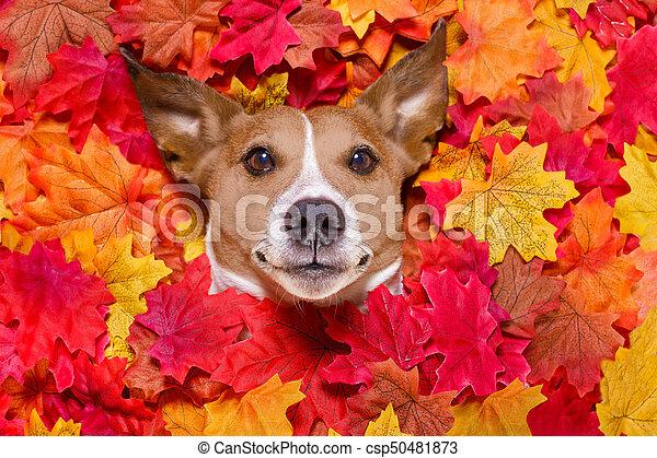autmn fall leaves dog - csp50481873