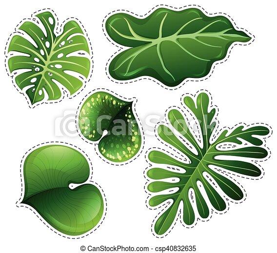 autocollant, ensemble, feuilles vertes - csp40832635