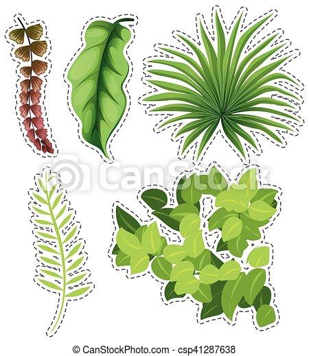 autocollant, ensemble, feuilles vertes - csp41287638