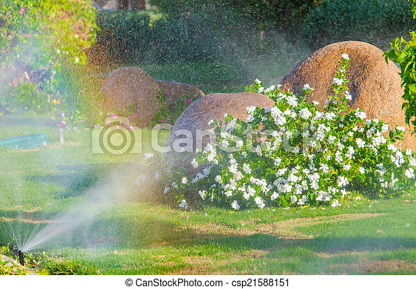 Automatic Sprinkle plants in the garden - csp21588151