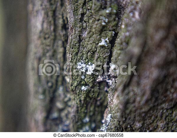automne, écorce, arbre, mousse - csp67680558