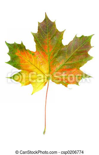 automne, #2, couleurs - csp0206774