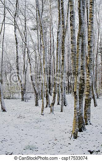 automne, après, parc, neiger orage - csp17533074