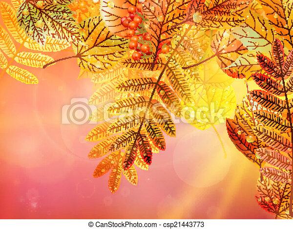automne, arrière-plan., feuillage - csp21443773