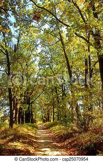 automne, brumeux, parc, chemin - csp25070954