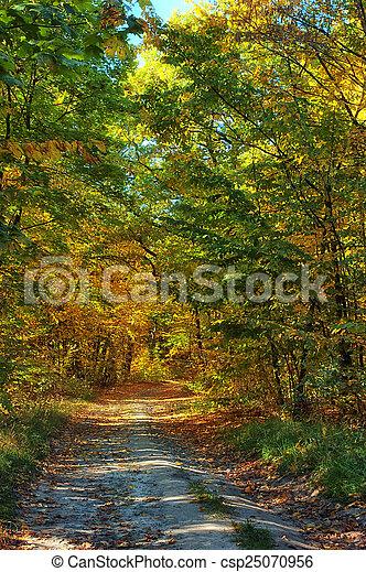 automne, brumeux, parc, chemin - csp25070956