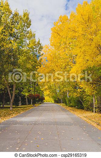 automne, chemin - csp29165319