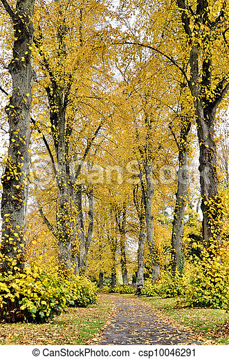 automne, chemin - csp10046291