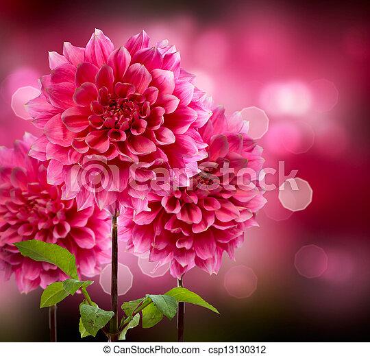 automne, dahlia, fleurs - csp13130312