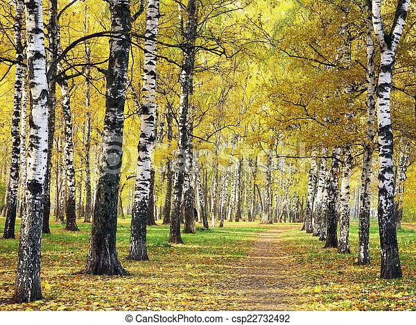 automne, doré, parc, chemin - csp22732492