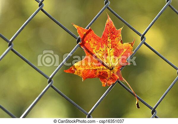 automne, feuille tombée, barrière - csp16351037