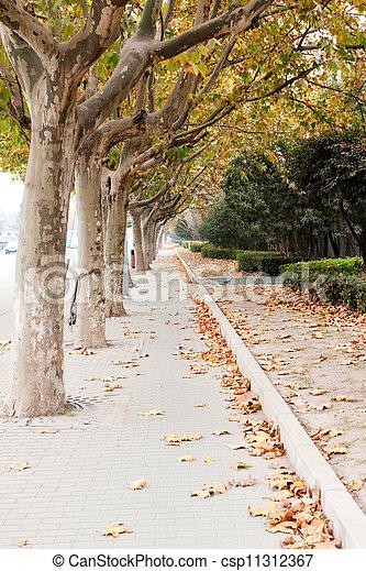 automne - csp11312367