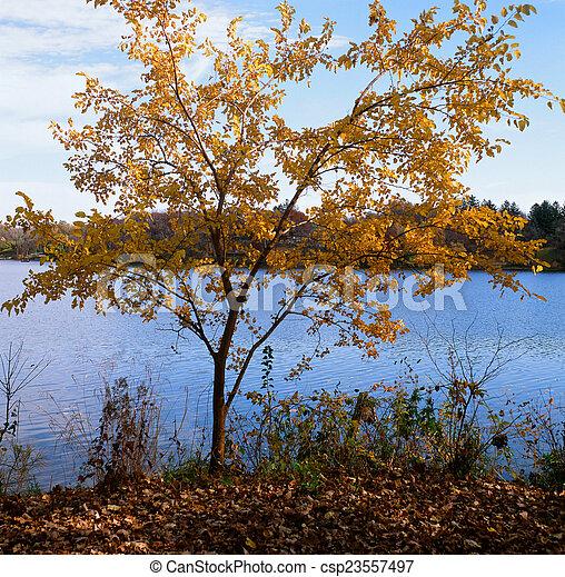 automne, johanna, -, minnesota, lac - csp23557497