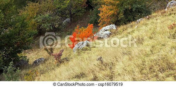 automne, montagne, couleurs, bois - csp16079519