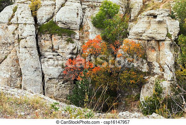 automne, montagnes, flore - csp16147957