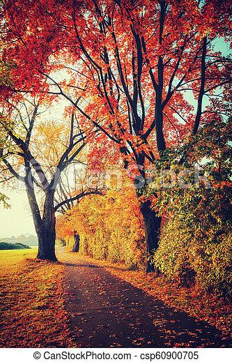 automne, parc, chemin - csp60900705
