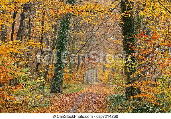 automne, parc, chemin - csp7214260