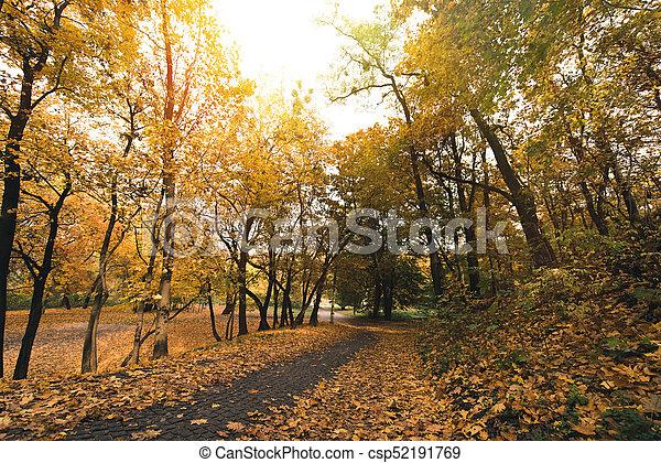automne, parc, chemin - csp52191769