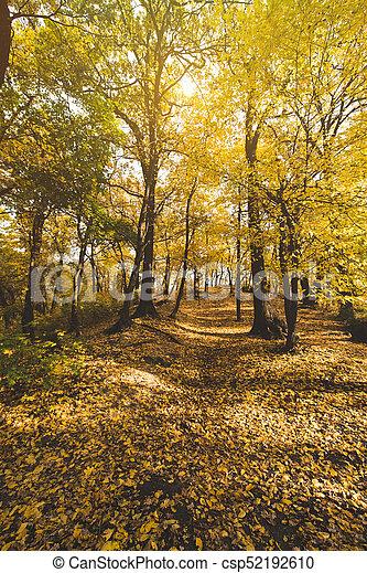 automne, parc, chemin - csp52192610