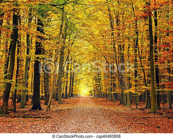 automne, parc, chemin - csp40493958