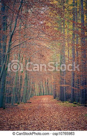 automne, parc, chemin - csp10765983