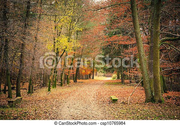 automne, parc, chemin - csp10765984