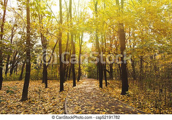 automne, parc, chemin - csp52191782
