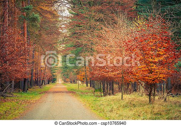 automne, parc, chemin - csp10765940