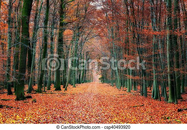 automne, parc, chemin - csp40493920