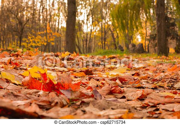 automne, parc, chemin - csp62715734