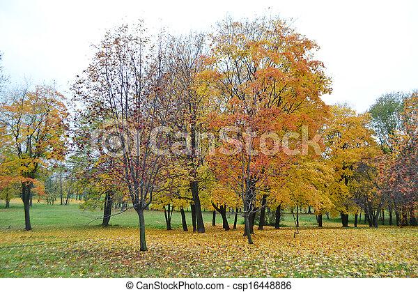 automne, parc - csp16448886