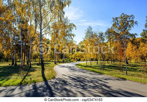 automne, parc, jour ensoleillé - csp53474163