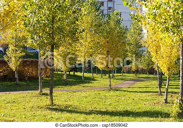 automne, parc, jour ensoleillé - csp18509042