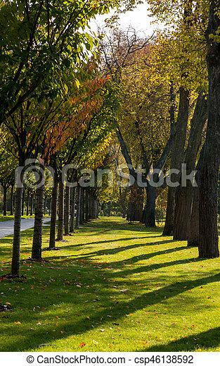 automne, parc, jour ensoleillé - csp46138592