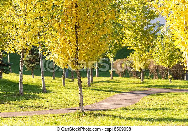 automne, parc, jour ensoleillé - csp18509038