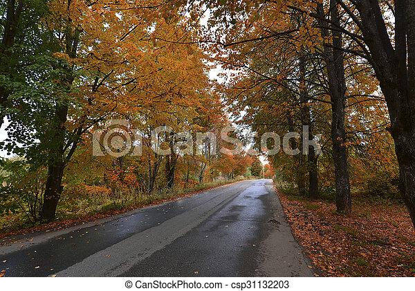 automne, parc, tôt, jour ensoleillé - csp31132203