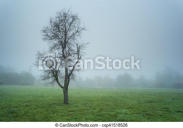 automne, park., brouillard - csp41518526