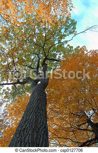 automne, perspective - csp0127706