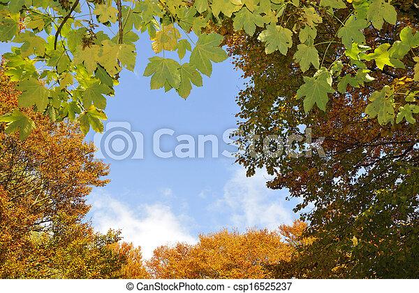 automne - csp16525237