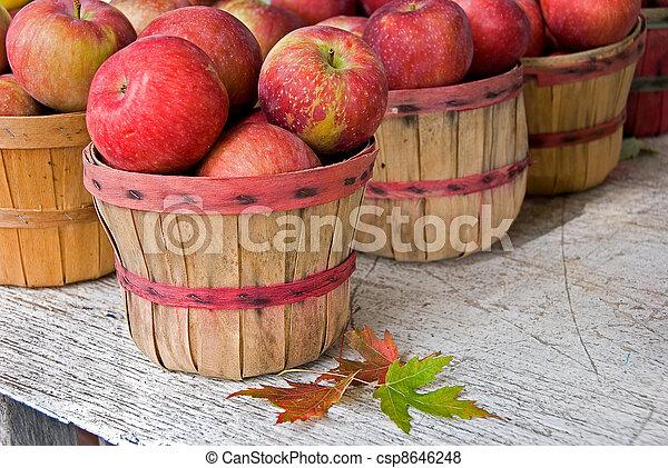 automne, pommes, paniers, boisseau - csp8646248