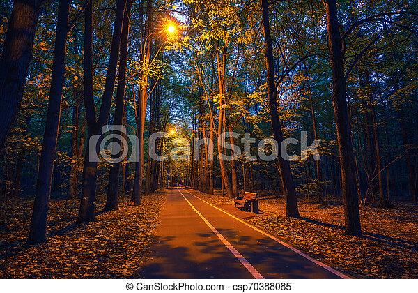 automne, poussière, parc, chemin - csp70388085