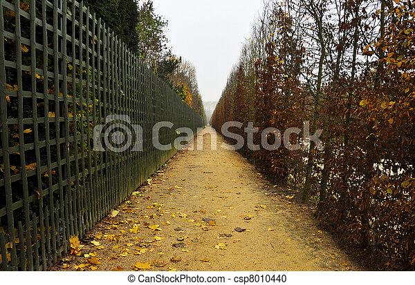 automne, sentier - csp8010440