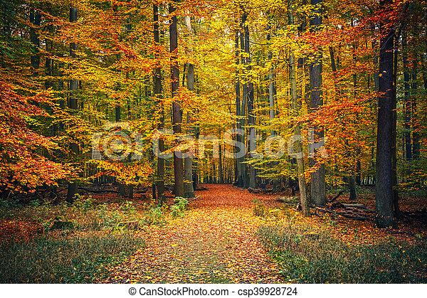 automne, sentier, parc - csp39928724